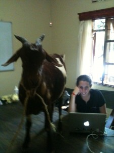 Just so you know, there may be a goat in the office.