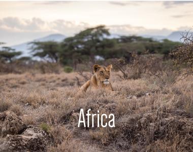 TTS-Africa-Button